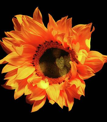 Sunflower Passion Art Print