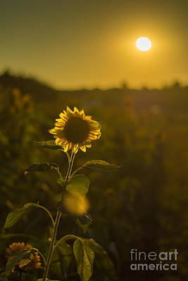 Sunflower Patch Sillhouette Art Print by Alissa Beth Photography