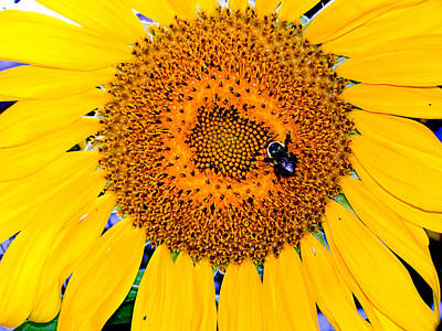 Photograph - Sunflower Petals by Natalie Holland