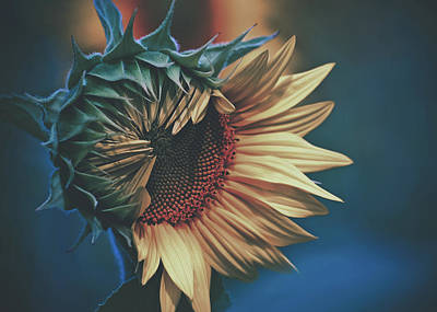 Photograph - Sunflower by Pixabay