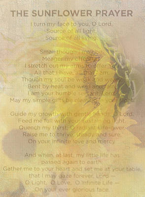 Photograph - Sunflower Prayer by Mary Timman