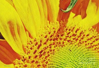 Photograph - Sunflower Quadrant 1 by Sarah Loft