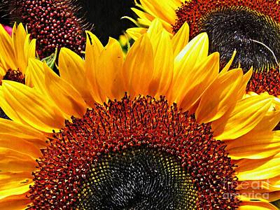 Photograph - Sunflower Rise by Sarah Loft