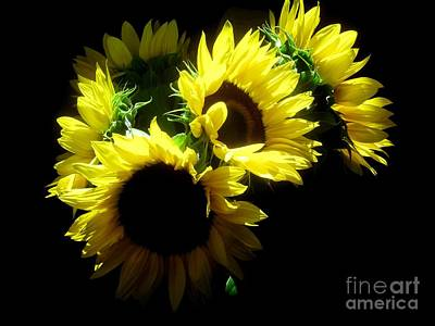 Photograph - Sunflower by Robert D McBain