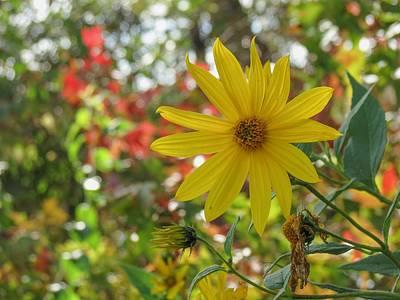 Wall Art - Photograph - Sunflower by Robert Papps