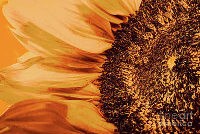 Photograph - Sunflower Salvo by Jean OKeeffe Macro Abundance Art