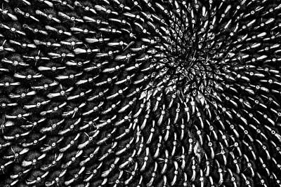 Photograph - Sunflower Seeds by Edgar Laureano