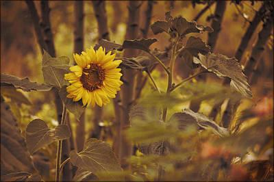 Art Print featuring the photograph Sunflower Sentry by Douglas MooreZart
