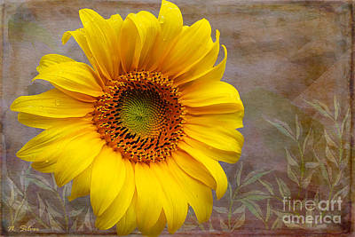 Sunflower Serenade Art Print