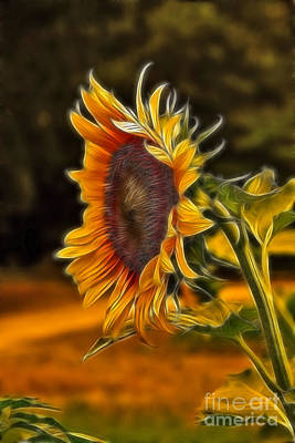 Flower Painting - Sunflower Series by Wendy Mogul