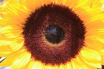 Art Print featuring the photograph Sunflower by Shirin Shahram Badie