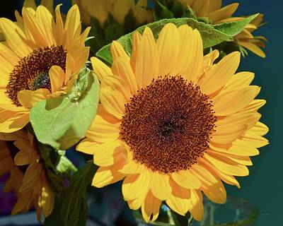 Photograph - Sunflower Show by Lynda Anne Williams
