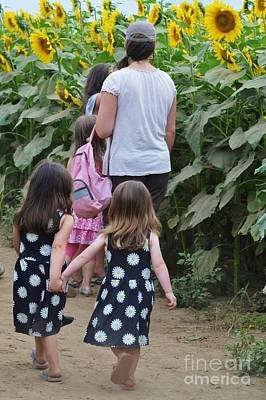Preston Farm Photograph - Sunflower Sisters by Virginia Levasseur