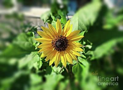 Photograph - Sunflower Smile by Felipe Adan Lerma