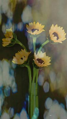Photograph - Sunflower Softness by Roberta Byram