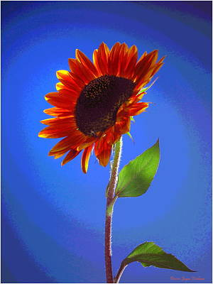 Print featuring the photograph sunflower Solitaire by Joyce Dickens