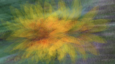 Photograph - Sunflower Spray by Deborah Hughes