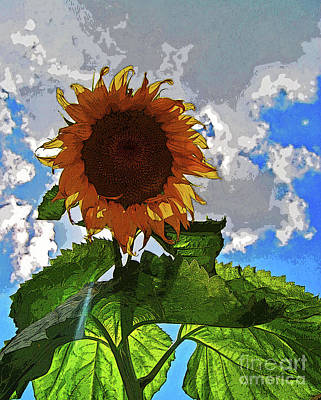 Photograph - Sunflower Staring You In The Eye by George D Gordon III