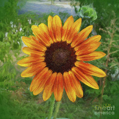 Painting - Sunflower by Stephen Mitchell
