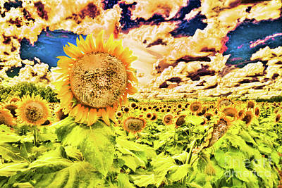 Photograph - Sunflower Storm by Diana Raquel Sainz