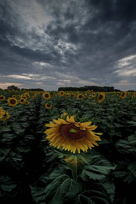 Photograph - Sunflower Stormy Clouds by Chris Harris