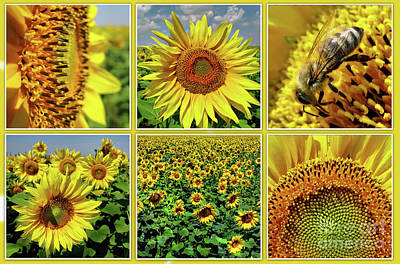 Photograph - Sunflower Story - Collage by Daliana Pacuraru
