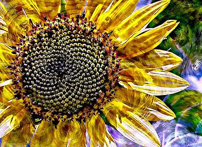 Photograph - Sunflower Study by Suzanne Stout