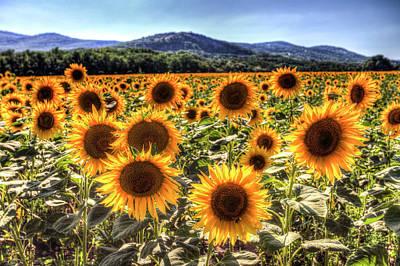 Photograph - Sunflower Summer Fields by David Pyatt