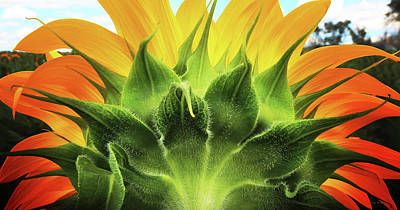 Sunflower Sunburst Art Print