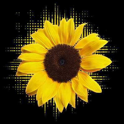 Photograph - Sunflower Sunburst by Gill Billington