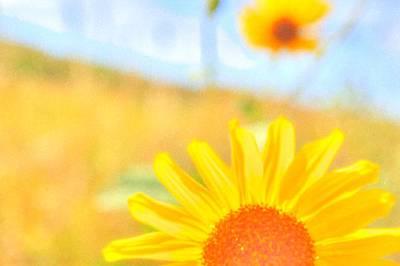 Digital Art - Sunflower Sunlight by Aliceann Carlton