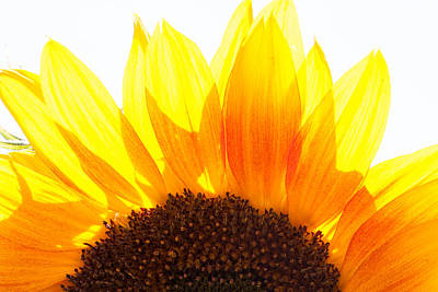 Photograph - Sunflower Sunrise by Elaine Goss