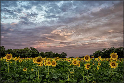 Photograph - Sunflower Sunrise by Erika Fawcett
