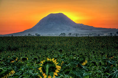 Photograph - Sunflower Sunrise by Fiskr Larsen