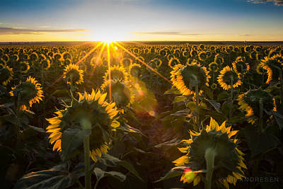 Photograph - Sunflower Sunrise by Kari Andresen