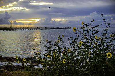 Photograph - Sunflower Sunrise by Leticia Latocki