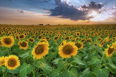 Texas Sunflower Photograph - Sunflower Sunset 1 by Rob Greebon