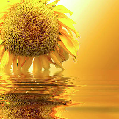 Photograph - Sunflower Sunset by David French