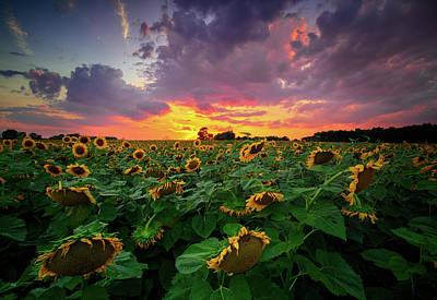 Photograph - Sunflower Sunset by Emmanuel Panagiotakis