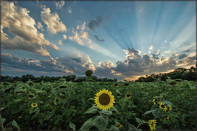 Photograph - Sunflower Sunset by Erika Fawcett