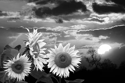 Photograph - Sunflower Sunset In Black And White by Gill Billington