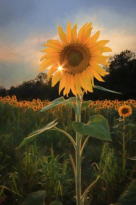 Sunflower Sunset Art Print by Lori Deiter
