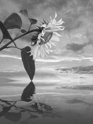 Photograph - Sunflower Sunset Reflections In Mono by Gill Billington