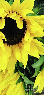 Photograph - Sunflower Sunshine by Michael Krek