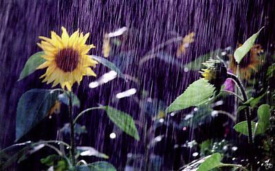 Photograph - Sunflower Sunshower by Wayne King