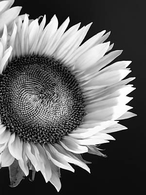 Sunflower Supermodel Art Print