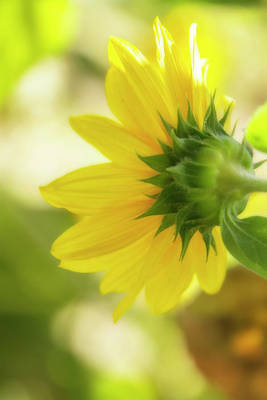 Macro Digital Art - Sunflower Sweet by Terry Davis