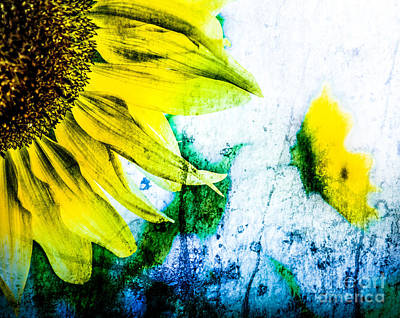 Photograph - Sunflower Texture by Michael Arend