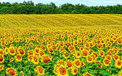 Sunflower Art Print by Thomas M Pikolin