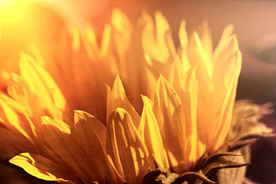 Photograph - Sunflower To The Sky by Michael Hope